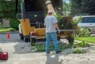 Albany Tree cutting services 13