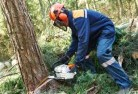Albany Tree cutting services 21