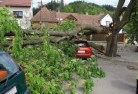 Albany Tree felling services 41