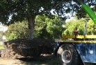 Albany Tree felling services 4