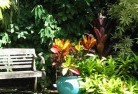 Albany Tropical landscaping 11