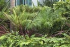 Albany Tropical landscaping 2