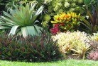 Albany Tropical landscaping 9