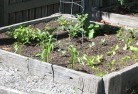 Albany Vegetable gardens 14