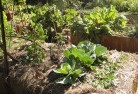 Albany Vegetable gardens 2