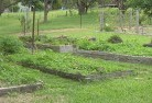 Albany Vegetable gardens 5