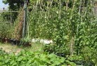 Albany Vegetable gardens 6